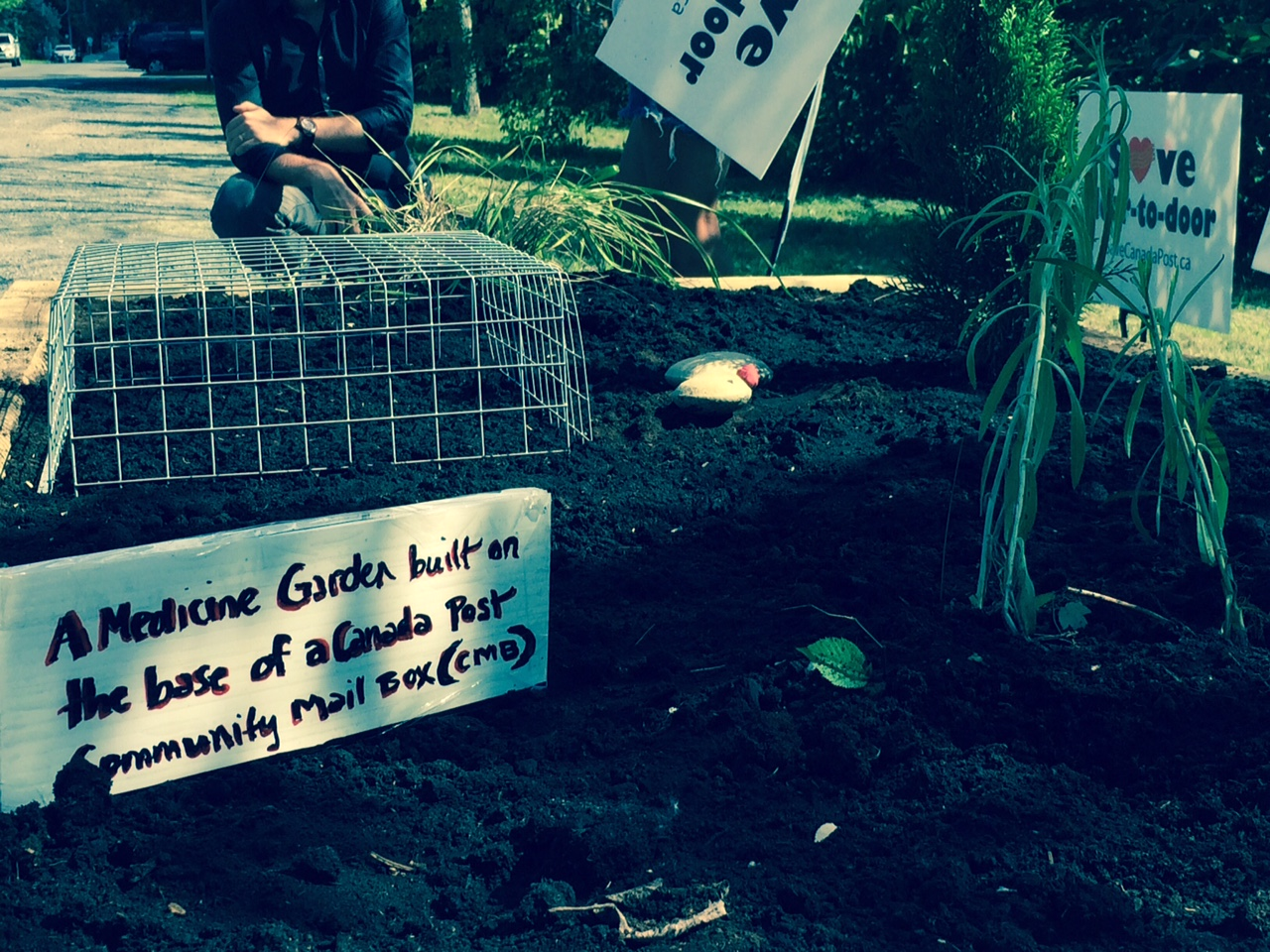 A resident in Ottawa, with the help of nearby CUPW members, started a full-time occupation of a CMB pad a few weeks ago. The occupation transformed in to a garden-building task force, and a medicine garden now grows on the site.