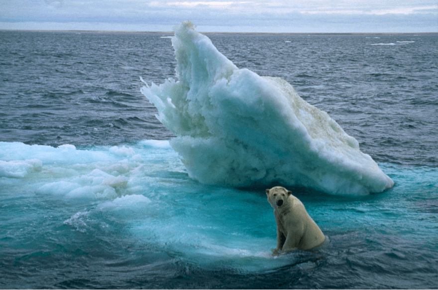 Photo of a polar bear sitting on an iceberg